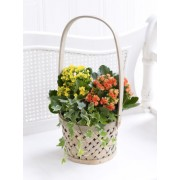 Autumn Kalanchoe Basket
